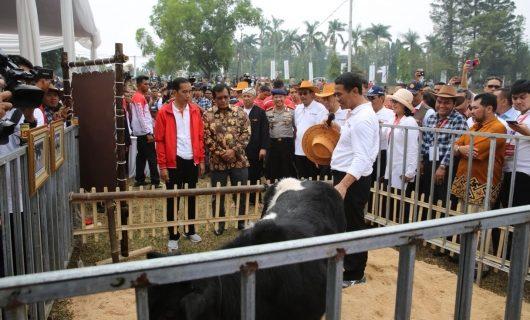 Ini Alasan Pemerintah Gelar Jambore Peternakan Nasional 2017